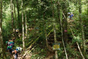 Forest Rinjani