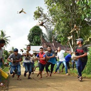 Duck Race West Sumatera