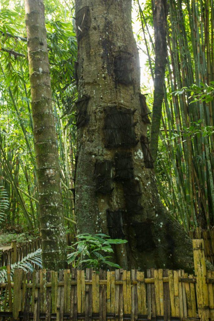 Tomb Tree Toraja