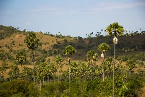 Rinca island landscape