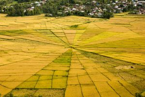 Cancar Spiderweb Ricefields