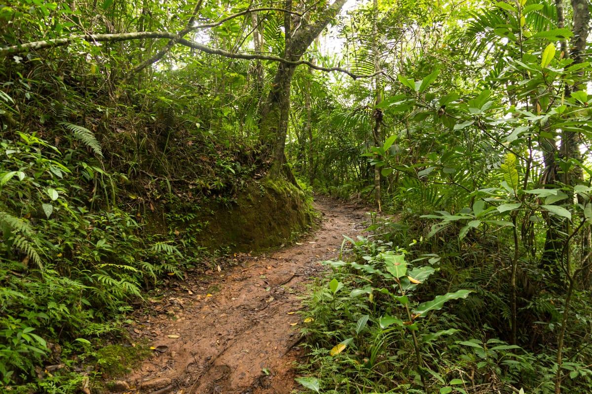Wae Rebo hike