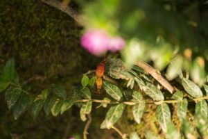 Insect Leuser