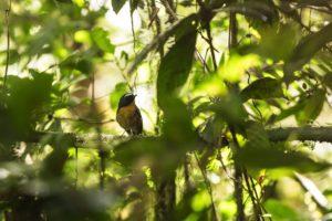Bird Leuser