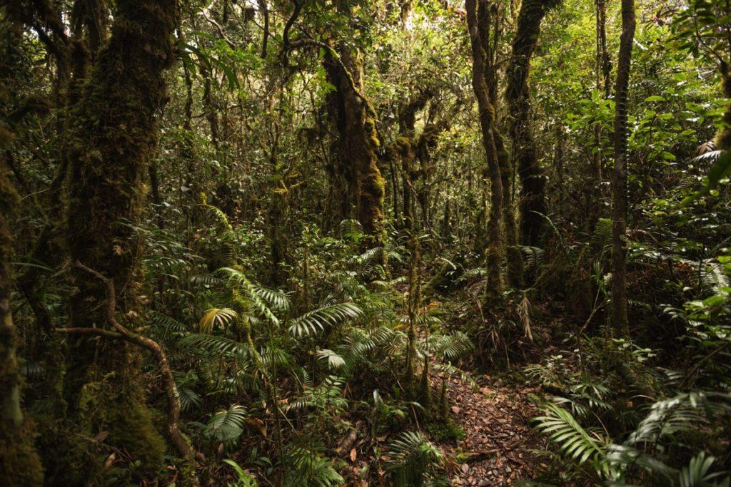 Moss forest Leuser