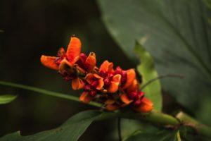 Plants Leuser