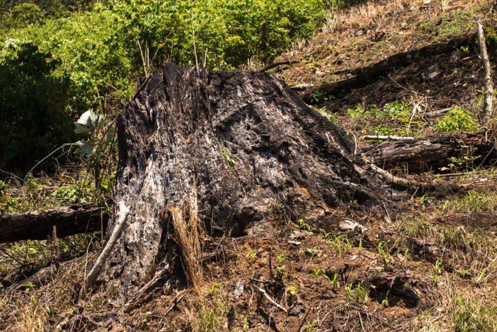 Logging Ketambe