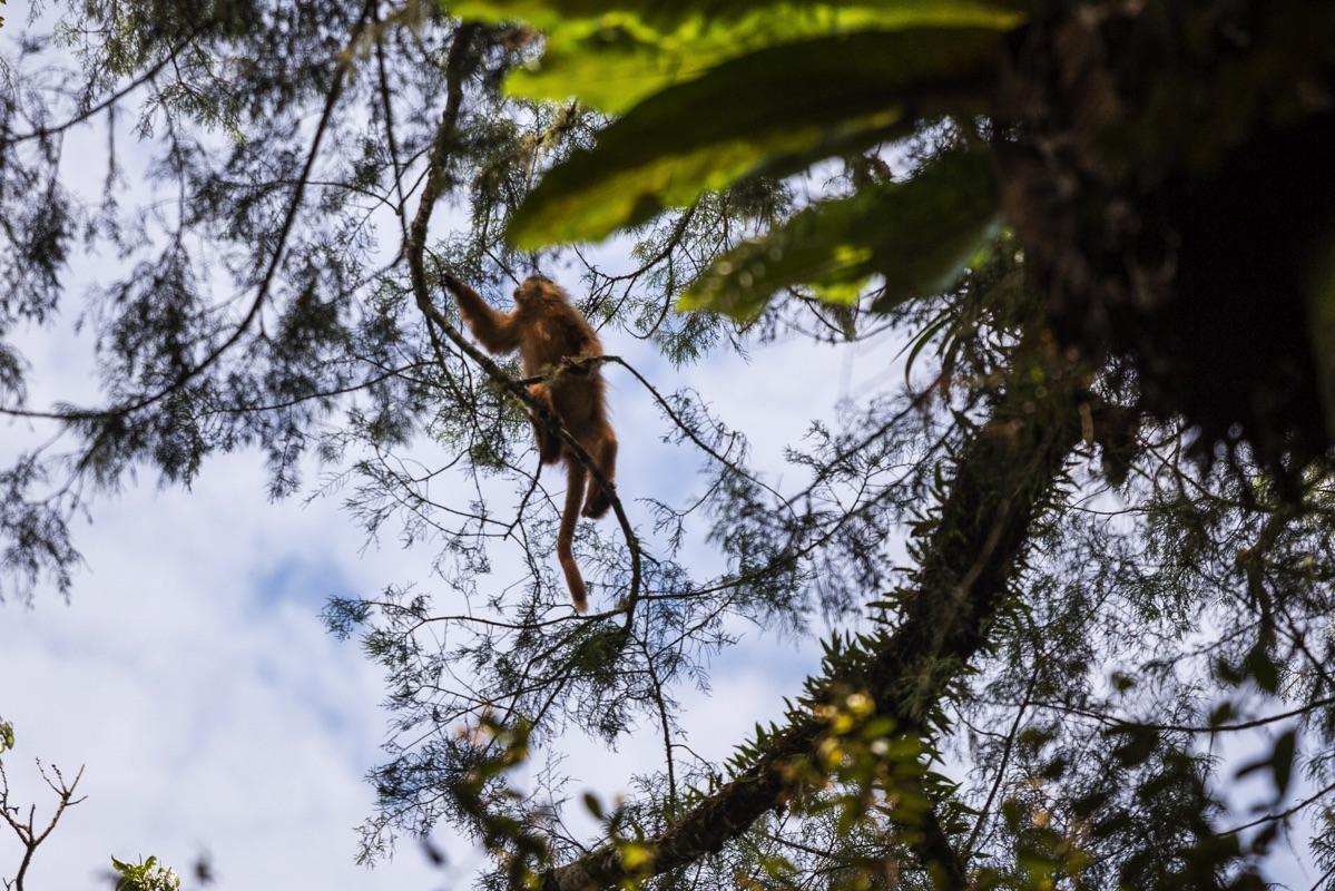 Wildlife Kerinci