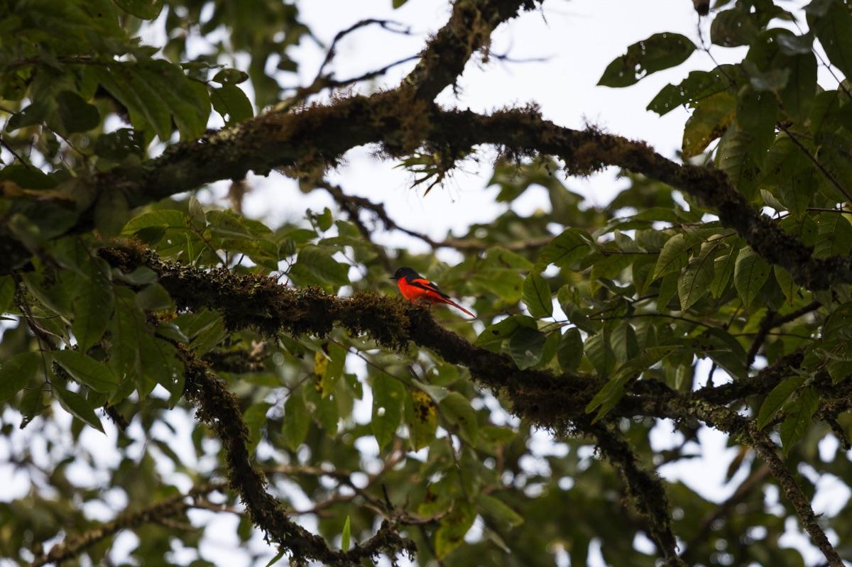 Wildlife Tapan road
