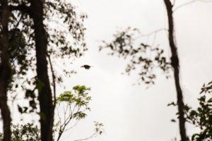 Kerinci wildlife