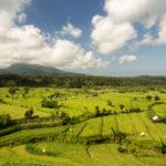 East Bali ricefields