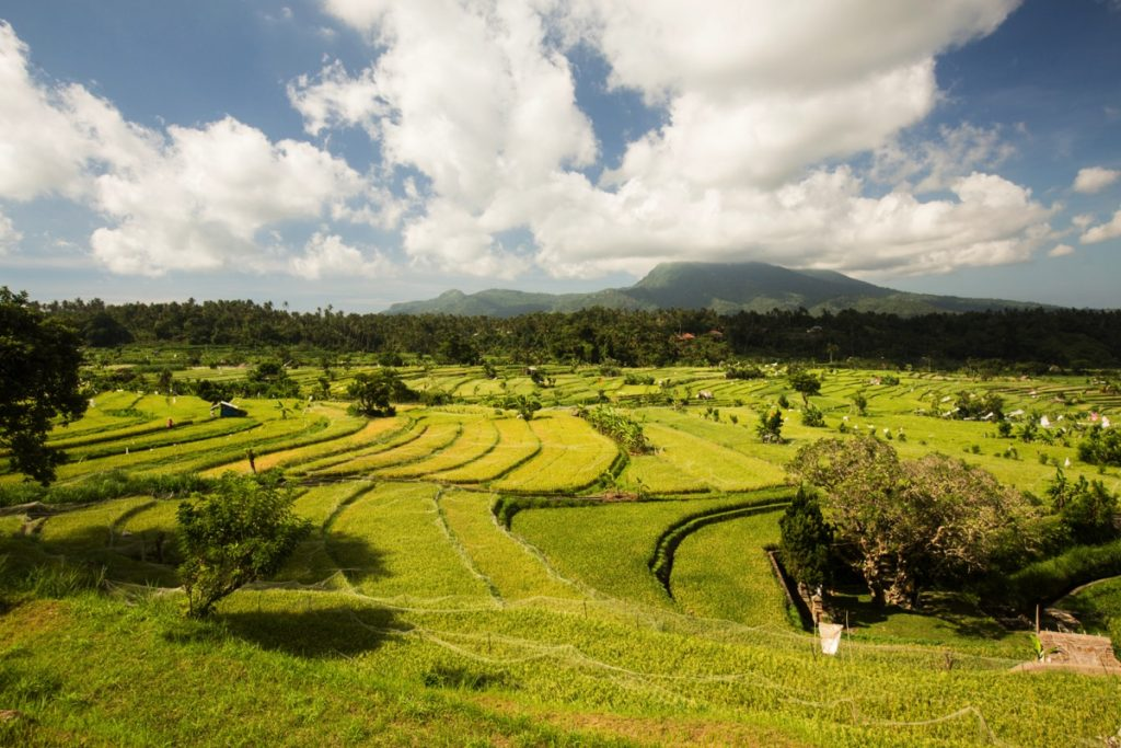 Tirta Gangga ricefields