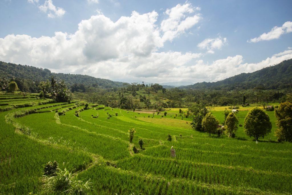 Sidemen ricefields Bali