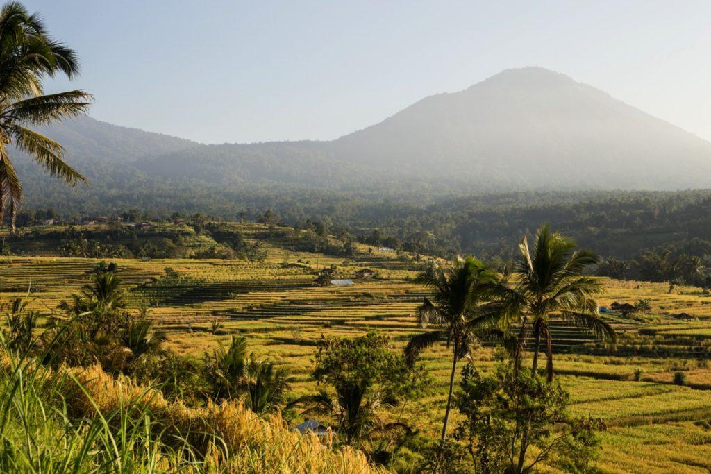 Jatiluwih ricefields Bali