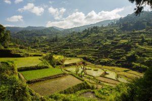 Sarambu Toraja