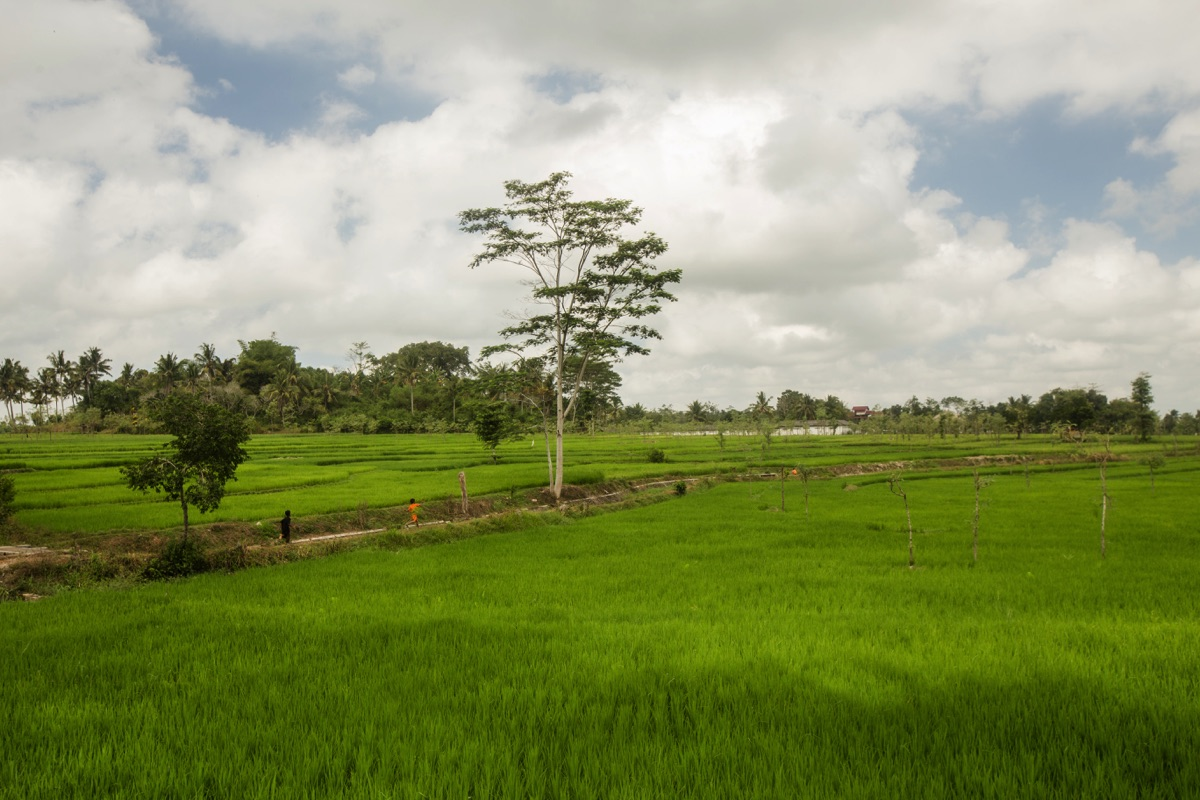 Ricefields Lombok