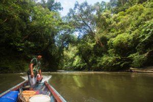Betung Kerihung Kalimantan